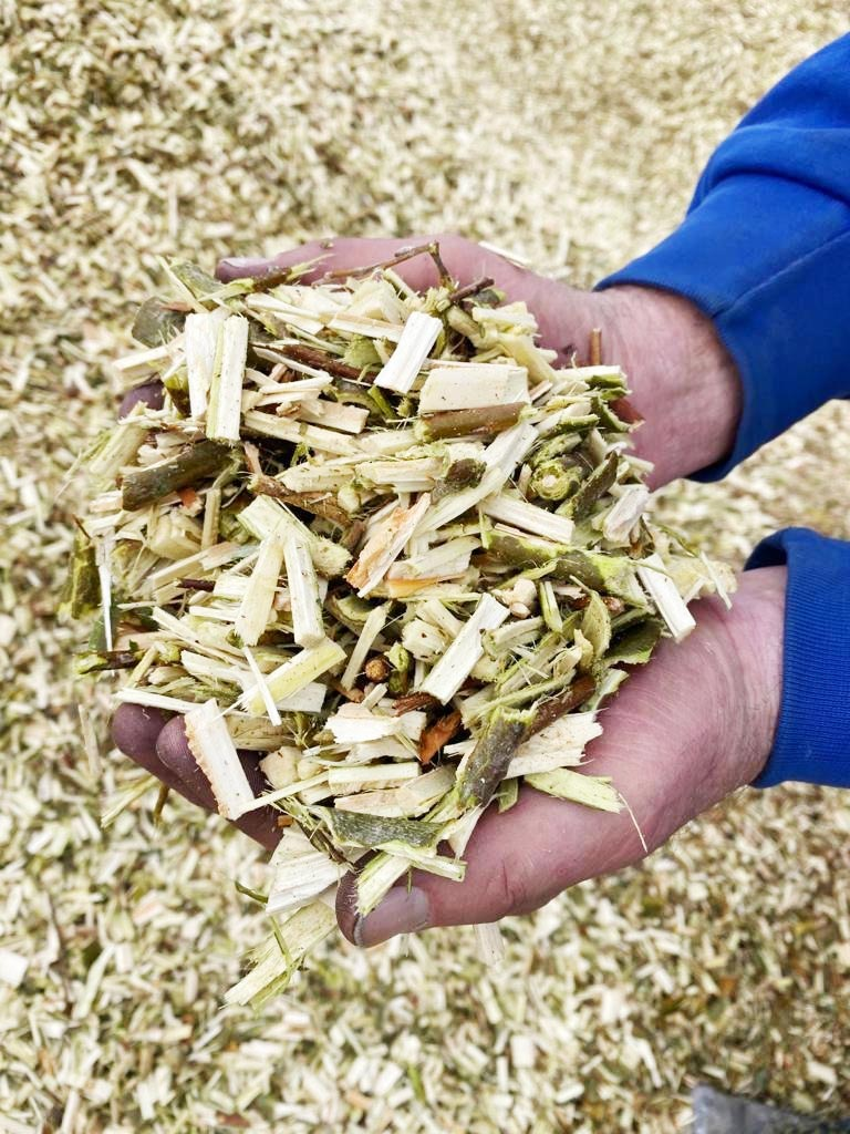 handful of woodchip biomass cut by energy crops consultancy